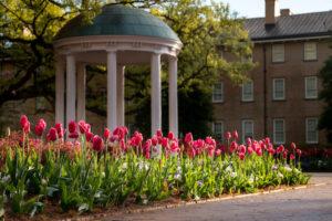 Carolina Old Well behind pink tulips